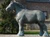 gerwen-nederlands-trekpaard-grassens_resize